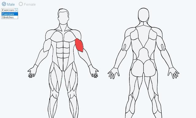 MuscleWiki สุดยอดคู่มือ แบบ Interactive สำหรับ Exercise และ Stretching