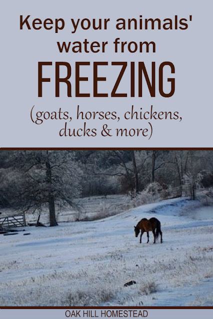 How to keep your livestock's water from freezing this winter. Tips to provide your goats, chickens, ducks, horses and other animals supplied with fresh, warm water during the winter.