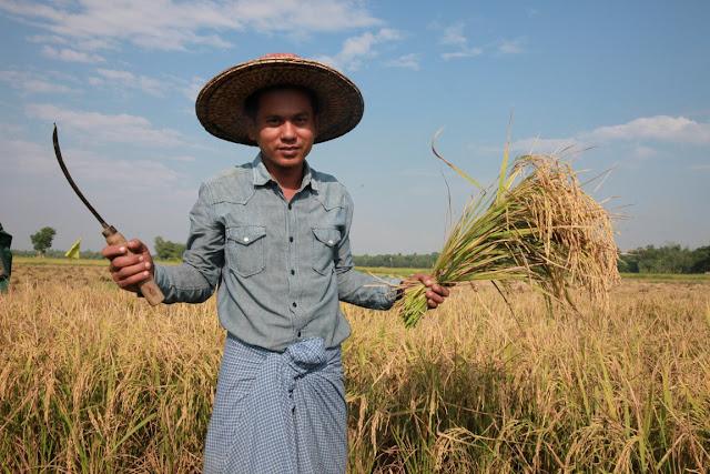 ေအာင္ၿငိမ္းခ်မ္း (Myanmar Now) ● လယ္သမားတို႔ညီညြတ္လွ်င္ စပါးေစ်းကြက္တိုးခ်ဲ႕ႏိုင္မည္ (အင္တာဗ်ဴး)
