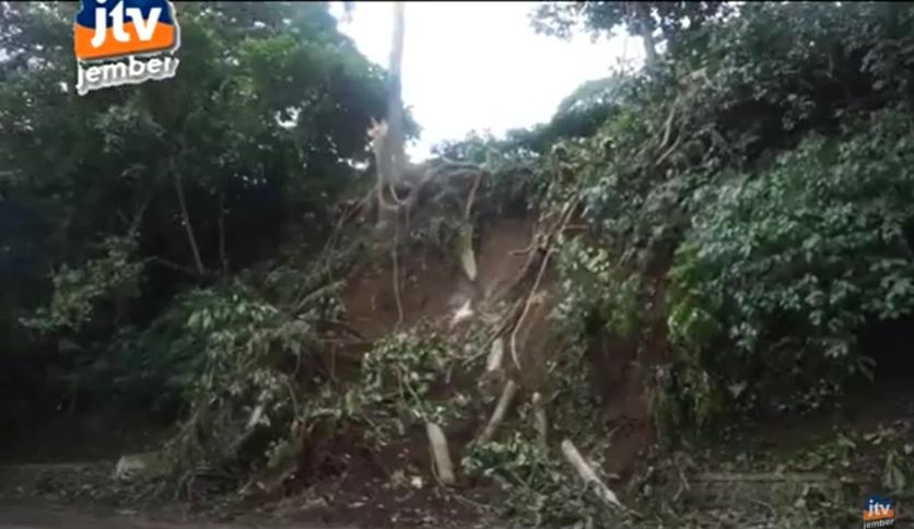 Jalur Gumtir Buka Tutup, Pohon Tumbang Di KM 31