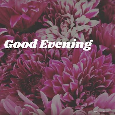 good evening rose image