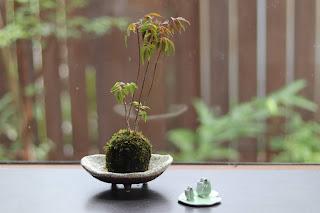 浅い鉢にのったハゼの苔玉とカエルの置物