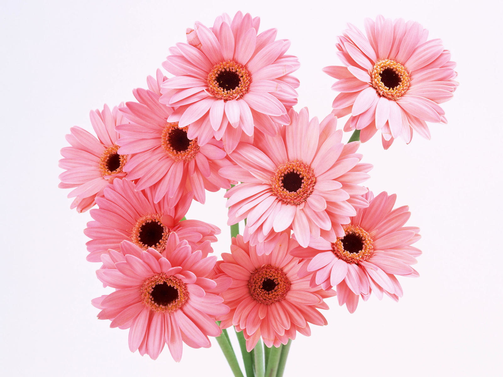 Flowers & Planets: Pink Flowers Wallpaper
