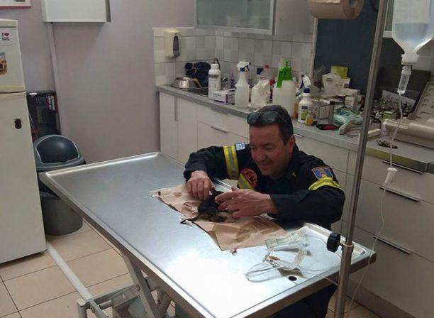 Σε κρίσιμη κατάσταση το κουταβάκι που βρήκε μαθητής στα σκαλιά του Παλαμηδίου