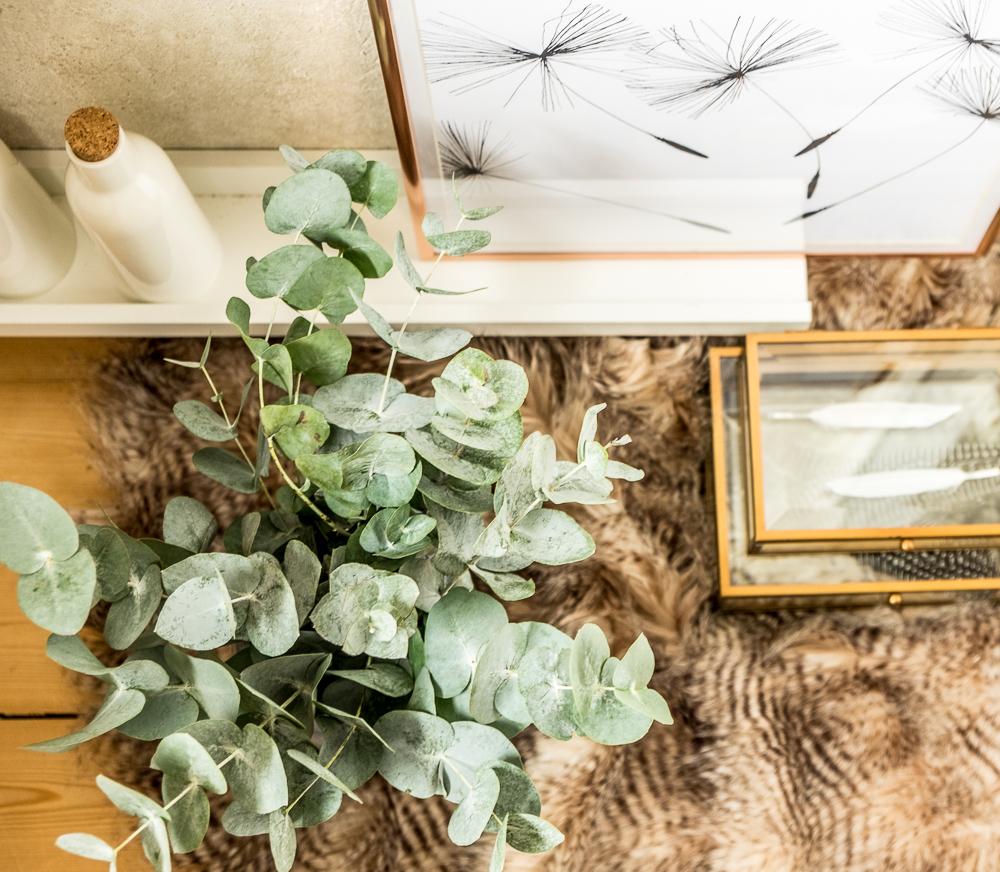 fim.works | Fotografie. Wortakrobatik. Wohngefühl. | Eukalyptus, ganz pur in der Vaseko