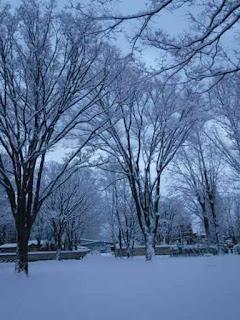 公園のケヤキ広場の雪