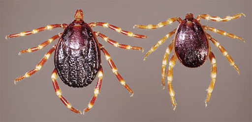 Crimean-Congo hemorrhagic fever is caused by Crimean-Congo hemorrhagic fever virus (CCHFV)