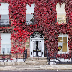 Black and white Georgian door with red Boston Ivy on Fitzwilliam Square