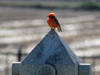 maxwell cemetery colusa county california