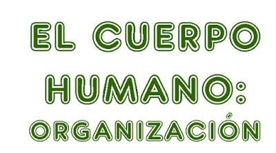 http://cplosangeles.juntaextremadura.net/web/quinto_curso/naturales_5/organizacion_cuerpo_5/organizacion_cuerpo_5.html