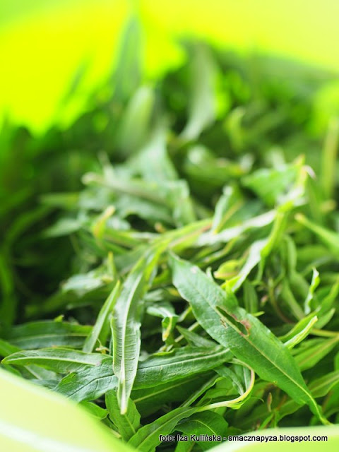 ziola, rosliny jadalne, wierzbowka kiprzyca, laka, herbata z wierzbowki, ivan czaj, herbata rosyjska, przetwory domowe