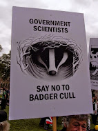 Against the Badger Cull ~ I Stand With the Badger People