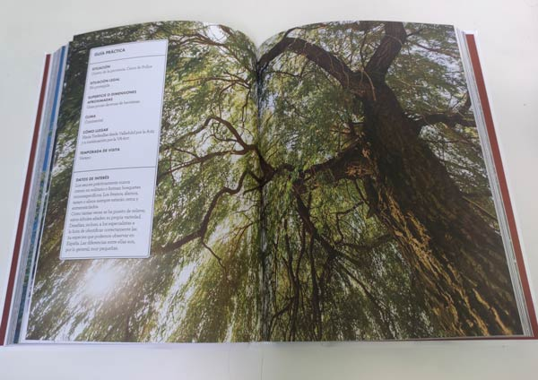 Interior del libro Bosques imprescindibles de España