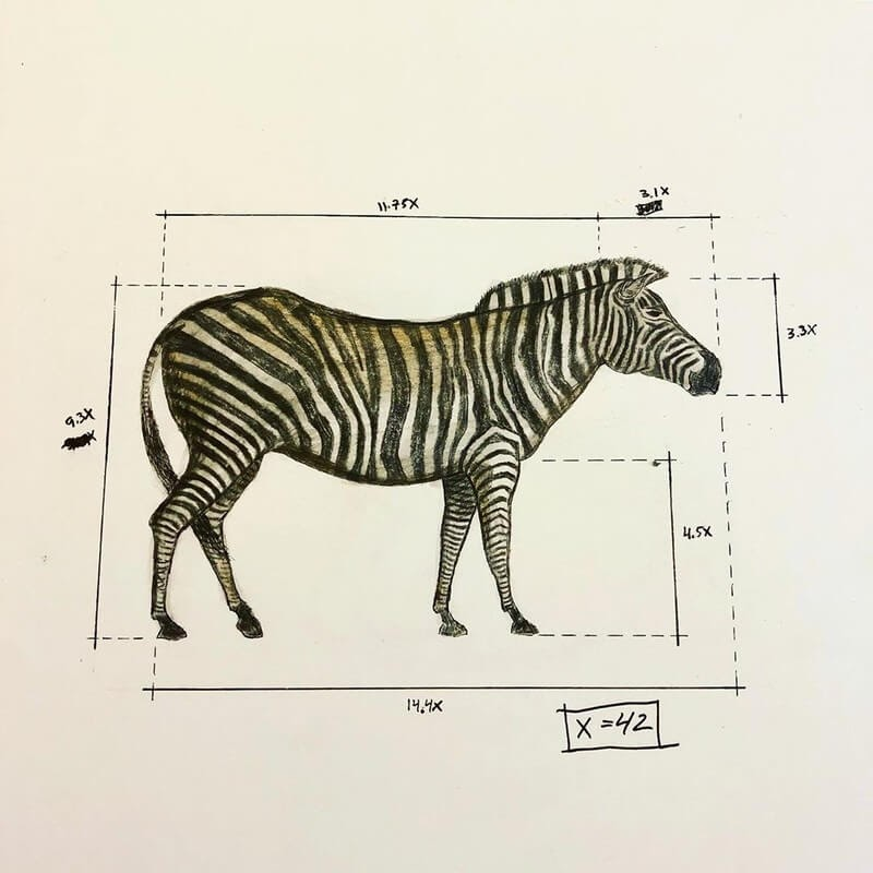 05-Zebra-Ran-Shapira-Animal-Drawings-from-a-Sculptor-s-Perspective-www-designstack-co