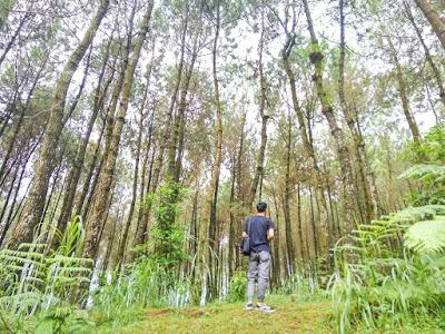 foto hutan pinus kragilan magelang