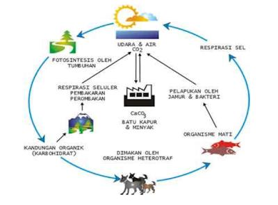 Siklus Karbon dan Oksigen