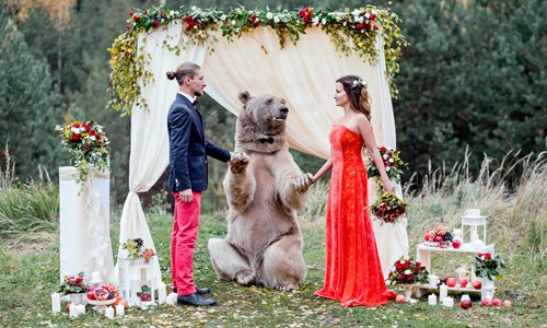 Bear acts as wedding witness in Russia