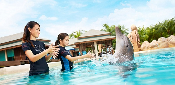 Tìm hiểu về cá heo với show Dolphin Interactive Programmes
