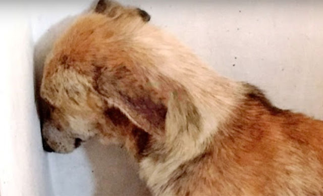 Собаку забрали у плохого хозяина, и она все время смотрела в стену