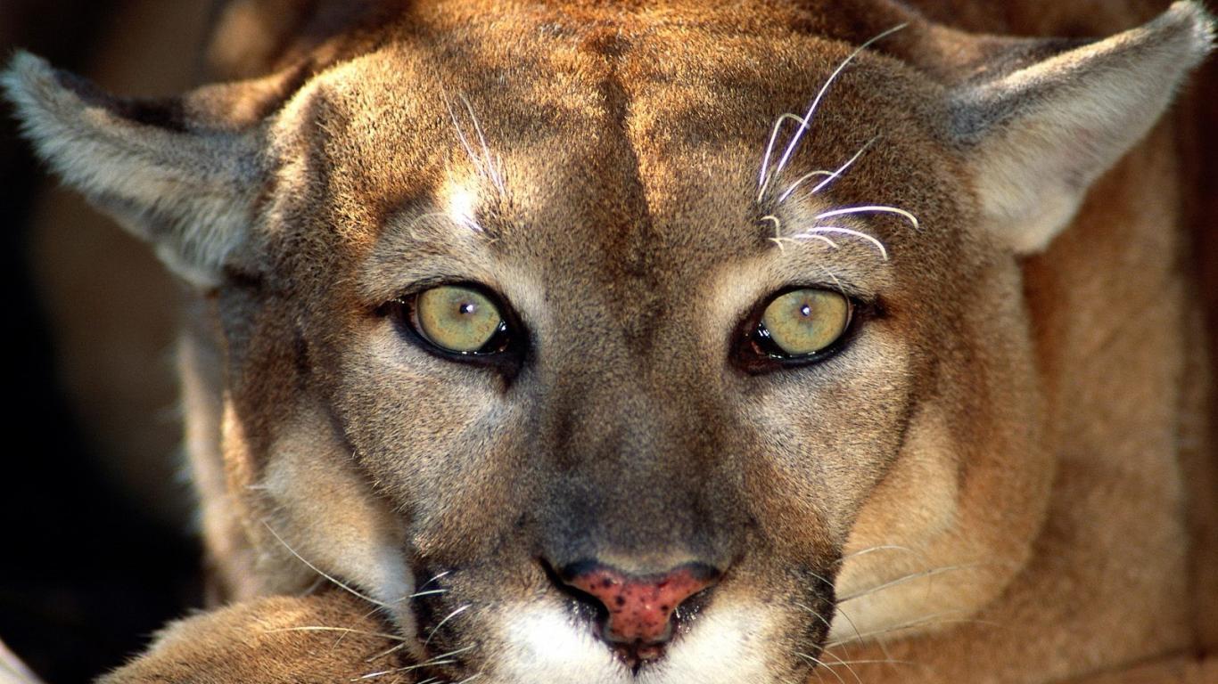 Beautiful African Animals Safaris: World's Most Dangerous ... - photo#44