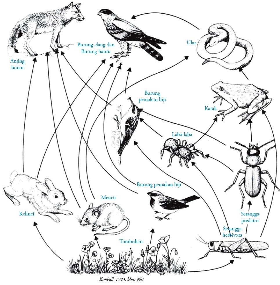 Contoh Ekosistem Rantai Makanan Auto Electrical Wiring Diagram