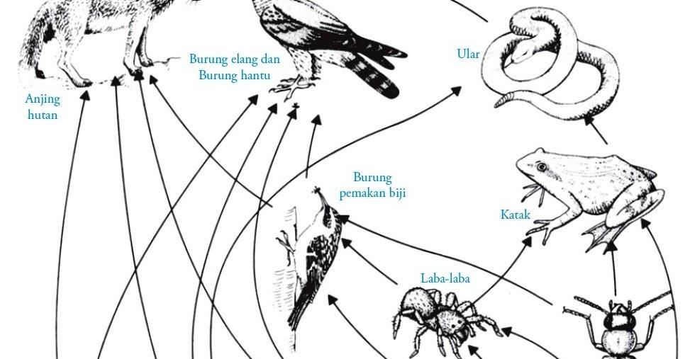 Rantai Makanan Jaring Jaring Makanan Dan Piramida Ekologi
