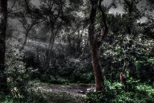 رعب, افلام رعب, قصص رعب, غابة هويا باكيو رومانيا