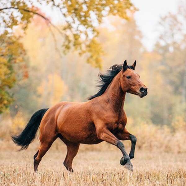 Manfaat-Daging-Kuda