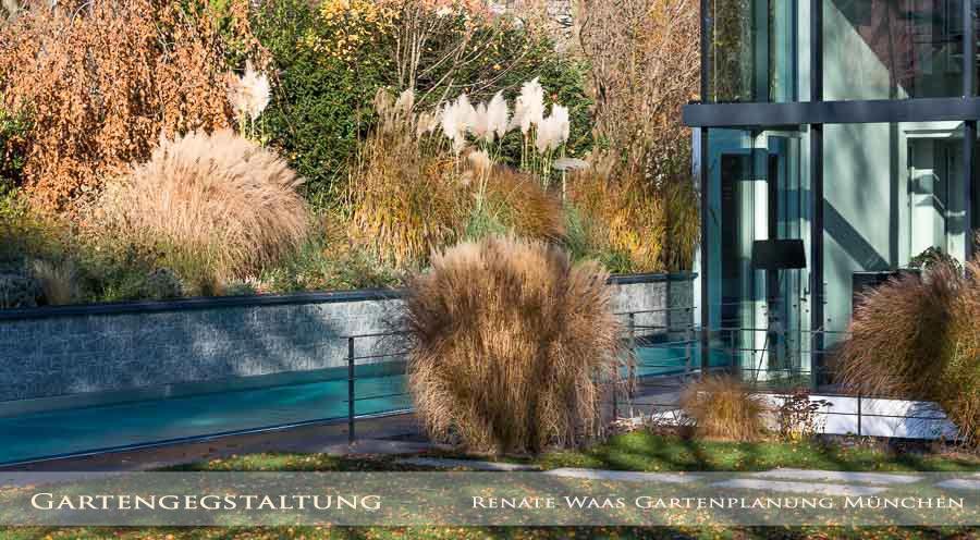 Ein Perfekter Goldener Oktober Mit Felsenbirne In Prächtiger Herbstfärbung  Und Prächtigen Gräsern In Den Staudenbeeten.