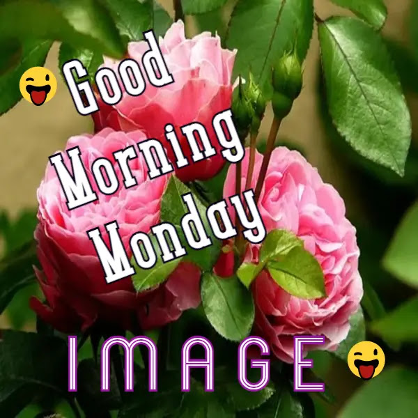 Good Morning Monday Images for Whatsapp Free Download
