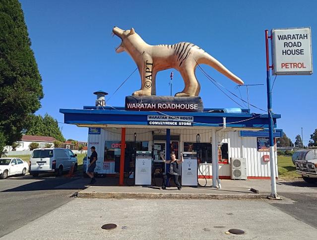 BIG Blow Up Tiger   Waratah, Tasmania
