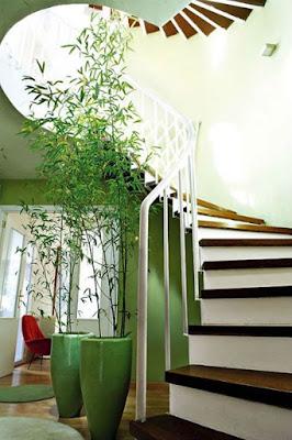 Esta enormes plantas aportan equilibrio y armonia al espacio.