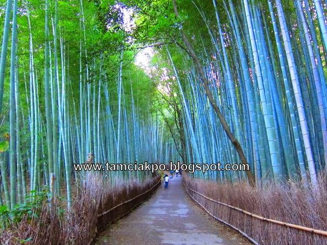 Eveninng walk in Sagano Bamboo of Arashiyama, Kyoto