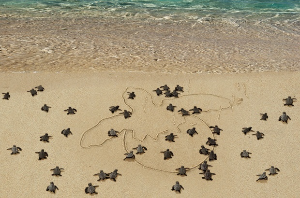 TAMAR 35 anos, Exposição conta história da 1ª geração de tartarugas marinhas