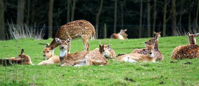 Malsi Deer Park Dehradun
