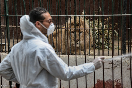 Sensitizing the Giza zoo during coronavirus pandemic