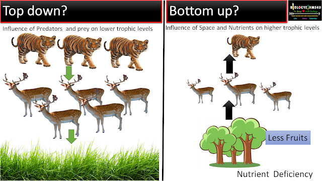 Top down vs Bottom up Trophic Cascade