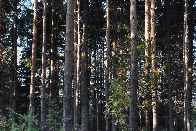 Forêt ardéchoise en automne