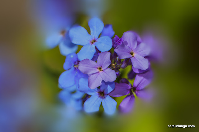 Flowers from blue to violet