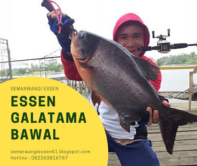 https://semarwangiessen61.blogspot.com/2019/08/essen-galatama-bawal-semarwangi.html