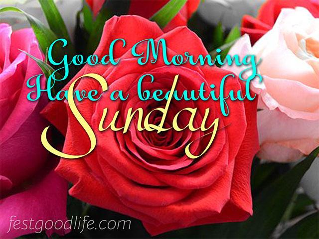 beautiful rose good morning images
