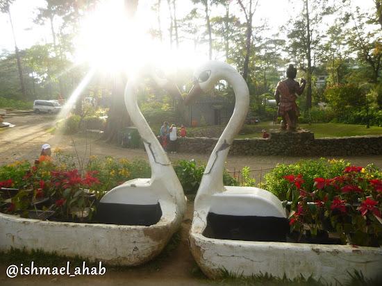 Swans in Baguio Botanical Garden