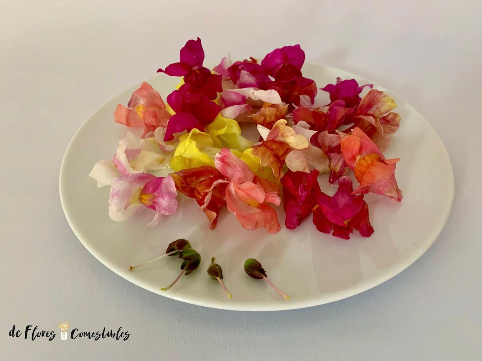 Decorar tus platos con flores comestibles