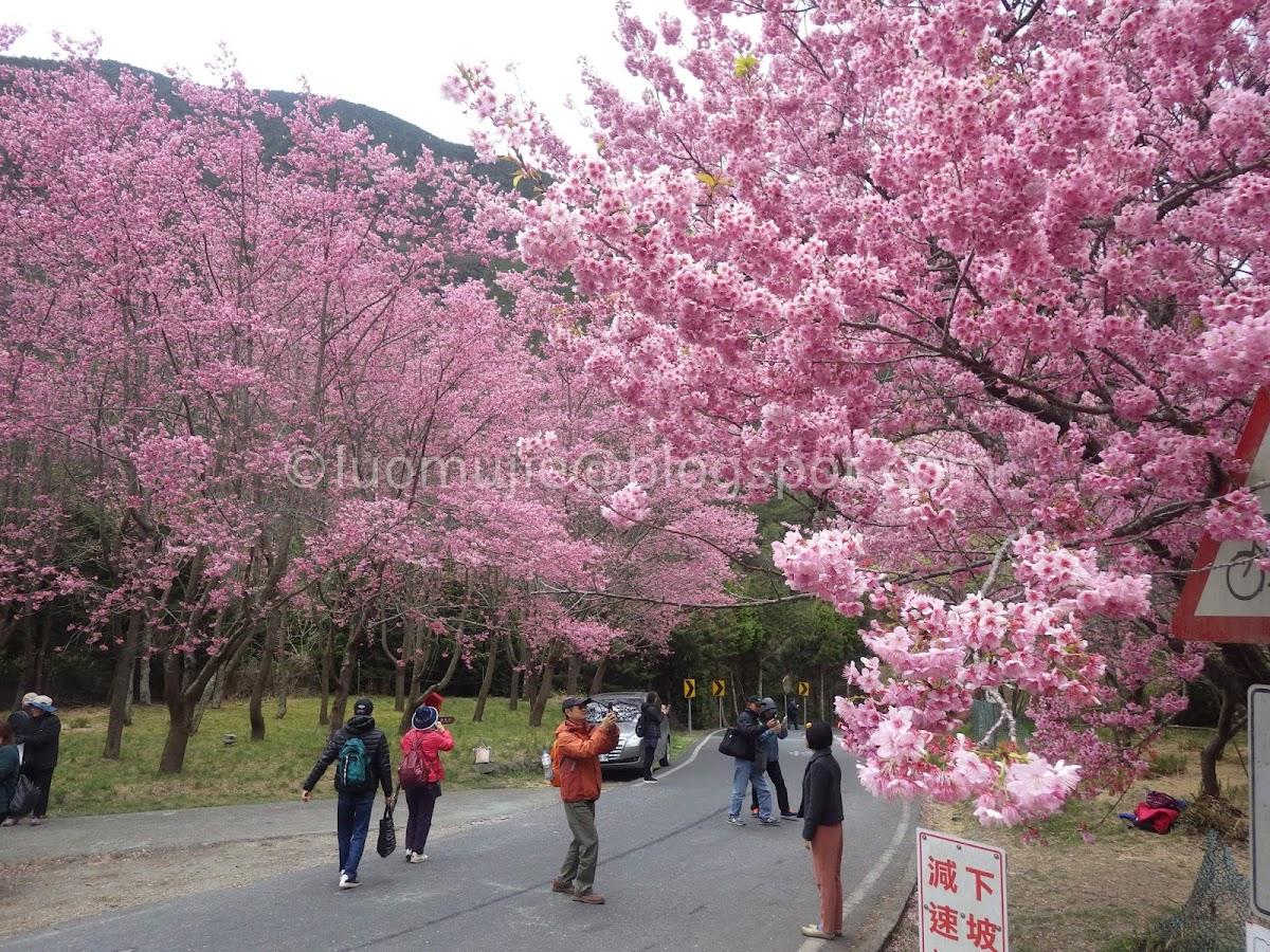 Taipei to Wuling Farm