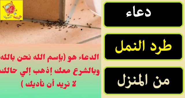 """""""دعاء طرد النمل """" """"دعاء لطرد النمل من المنزل"""" """"دعاء ذهاب النمل"""" """"دعاء لخروج النمل من المنزل"""" """"دعاء اخراج النمل من المنزل"""" """"دعاء النمل في البيت"""" """"دعاء طرد النمل من المنزل"""" """"دعاء لطرد النمل من البيت"""" """"دعاء لخروج النمل"""" """"ماهو دعاء طرد النمل"""" """"دعاء لاخراج النمل من البيت"""" """"دعاء اخراج النمل"""" """"دعاء النمل للخروج من المنزل"""" """"دعا طرد النمل"""" """"دعاء ذهاب النمل من المنزل"""" """"دعاء خروج النمل من المنزل"""" """"دعاء خروج النمل"""" """"دعاء صرف النمل"""" """"دعاء طرد النمل من البيت"""" """"حشرات تشبه النمل"""" """"دعاء ذهاب النمل من البيت"""" """"دعاء لطرد النمل"""" """"دعاء لصرف النمل عن البيت"""" """"حشرة صغيرة سوداء تشبه النمل"""" """"دعاء طارد النمل"""" """"دعاء خروج النمل من البيت"""" """"ماهو دعاء طرد النمل من المنزل"""" """"ادعية لطرد النمل من المنزل"""" """"دعاء النمل في المنزل"""" """"الدعاء لخروج النمل من المنزل"""" """"دعاء للتخلص من النمل"""" """"دعاء للتخلص من النمل في المنزل"""" """"هل يوجد دعاء لاخراج النمل من المنزل"""" """"دعاء النمل بالبيت"""" """"عجينة النمل والصراصير"""" """"دعاء يخرج النمل من البيت"""""""