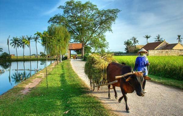 6 Ý tưởng khởi nghiệp  làm giàu ở nông thôn