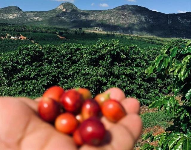Café da Chapada Diamantina é selecionada em principal concurso de café do mundo