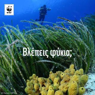 Δάση της θάλασσας από την WWF.