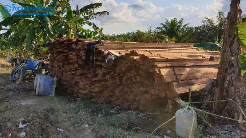 Polres Dumai Amankan  5 Tumpukan Kayu Hasil Ilegal Logging