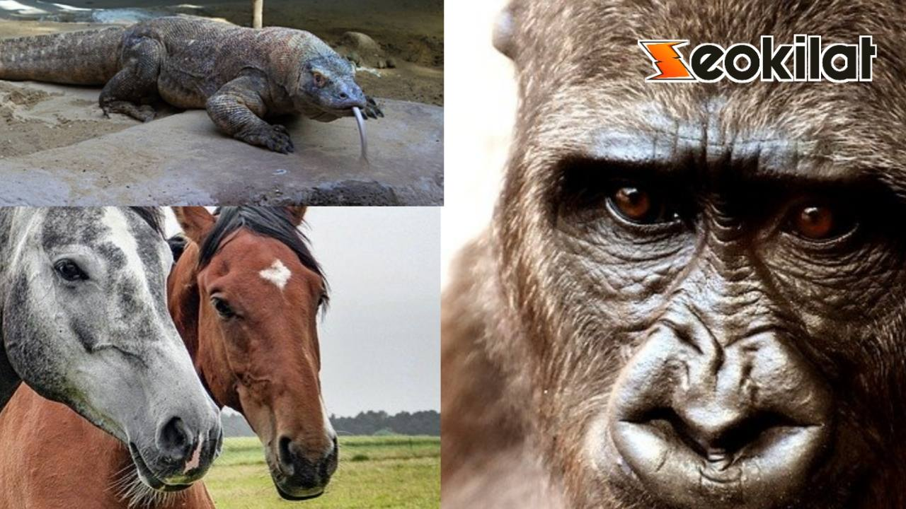 Sebutkan fauna Indonesia bagian barat, bagian Tengah, bagian timur